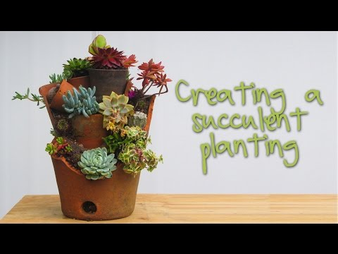 succulents-planting-in-terracotta-pots