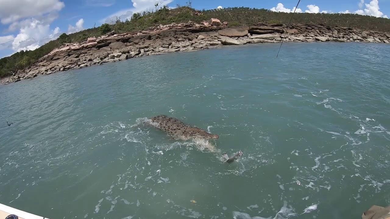 Croc attack barra