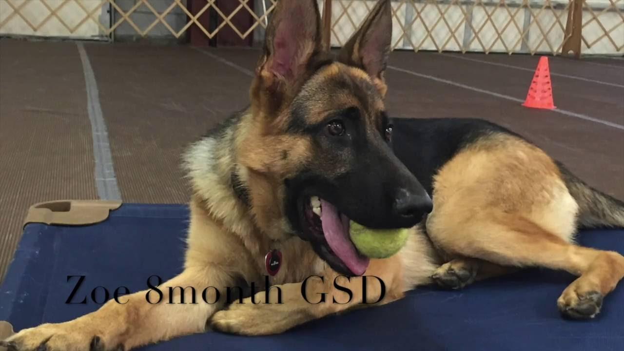 Best Dog Training On Long Island