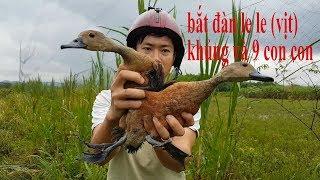 Bẫy gà đồng lưới bẫy chim đêm tổng hợp lh 0965051053