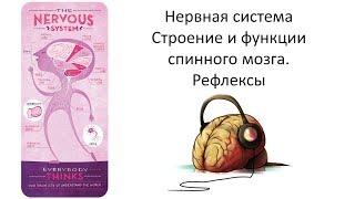 4.2 Нервная система СМ (8 класс) - биология, подготовка к ЕГЭ и ОГЭ 2019