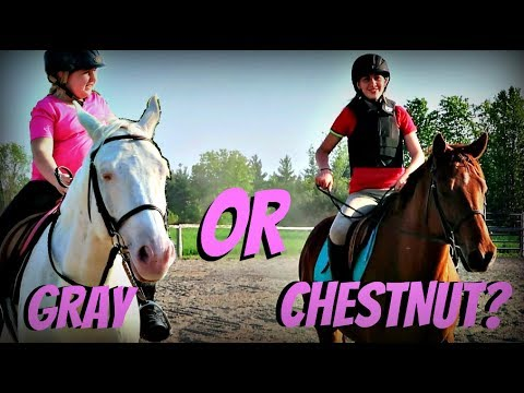 BUYING SOPHIE A HORSE  WHICH WOULD YOU CHOOSE? Day 144 (05/24/18)