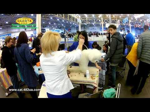 Грандиозная выставка собак, Киев, КСУ, декабрь 2018, часть 5