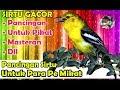 Pancingan Suara Pikat Burung Sirtu Cipoh Paling Ampuh Nonstop Durasi 1 Jam Ngalas(.mp3 .mp4) Mp3 - Mp4 Download