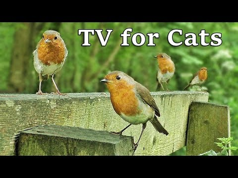 TV for Dogs : Birds in Slow Motion World - TV for Your Dog