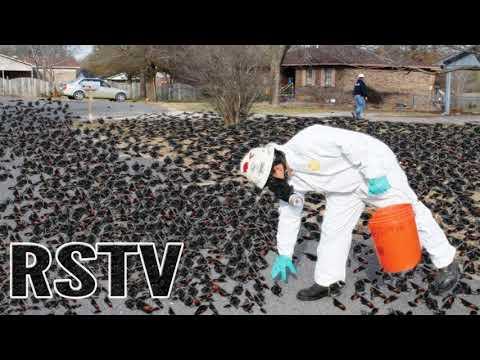 Cientos De Pájaros Encontrados Drogados Por Píldoras Para Humanos En California