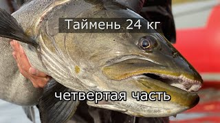 Дикие таймени Станового хребта четвёртая часть Таймень 24кг Уфа рулит Рыбалка на мышь Конкурс