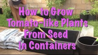 How to grow tomato-like plants from seed (DIY potting mix recipe)