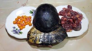 как приготовить суп из черепахи или как приготовить камень для террариума