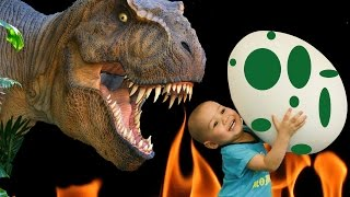 dinosaur eggs  | dino eggs  | real dinosaur egg  | dinosaur egg oatmeal   | dinosaur egg toy