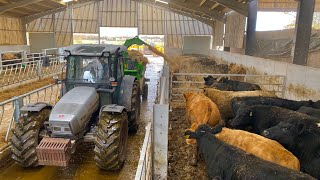BEDDING UP 100 COWS IN 3 MINUTES WITH A BRAND NEW MACHINE !