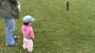 Maja krzyczy na wrony