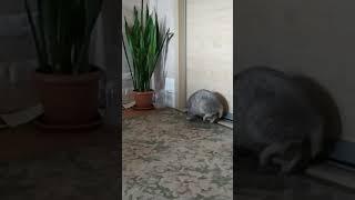 смешные животные кот Марсель