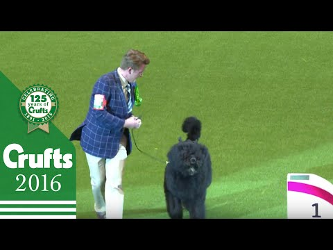 Working Group Winner Interview | Crufts 2016