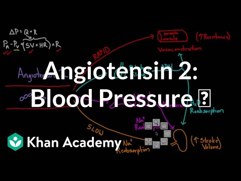 Angiotensin 2 raises blood pressure | Renal system physiology | NCLEX-RN | Khan Academy