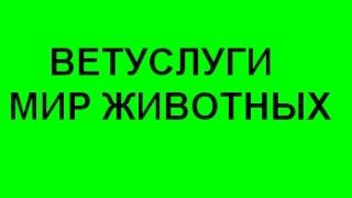 ВЕТУСЛУГИ МИР ЖИВОТНЫХ Срочный вызов ветеринара на дом Киев цены недорого(, 2015-04-02T10:39:48.000Z)