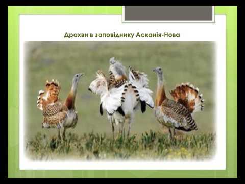 Природні зони України.Степ