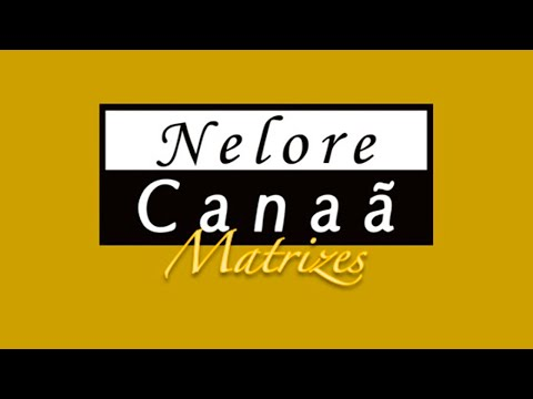 Lote 39   Habanera FIV AL Canaã   NFHC 1115   Helegance FIV AL Canaã   NFHC 1131 Copy