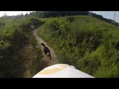 """Bernese Mountain Dog Border Collie Cross """"Davina"""" Mtn Biking 2017 Allegiant K9s"""