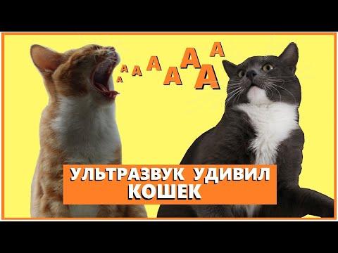Кошаки в шоке от звука!