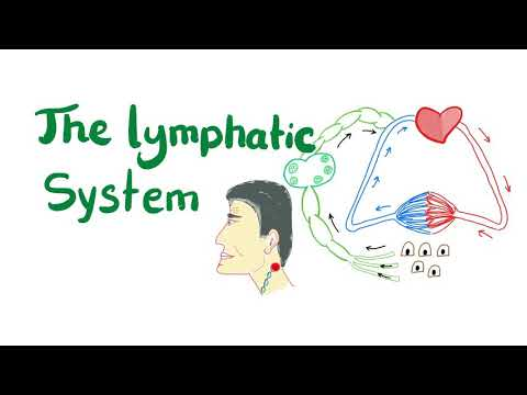 The Lymphatic System, All you need to know.