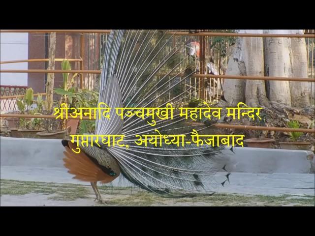 MAYUR-NRITYA @ shri anandi panchmukhi mhadeva mandir , goprtar ghat , ayodhya