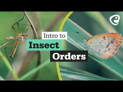 Taxonomy: An introduction to Insect Orders