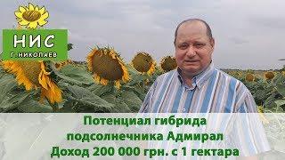 Потенциал гибрида подсолнечника Адмирал. Доход 200 000 грн. с 1 гектара