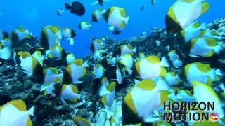 FULL HD 1080P VIDEO MUSIC 海底攝影 小丑魚 熱帶魚 魟魚 鯊魚 潛水 魚群 aq0001033