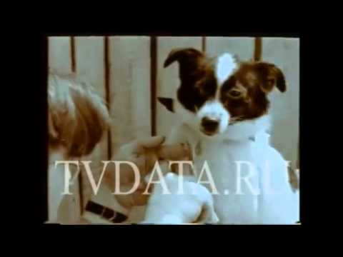 Russian space program Laika Dog in Space _T31_3.mp4