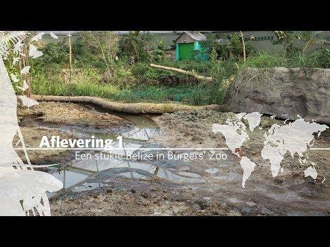 Project Mangrove: Een stukje Belize in Burgers' Zoo Aflevering 1