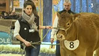 Concours national de la race bovine limousine