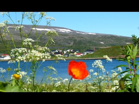 Båtsfjord in the summertime