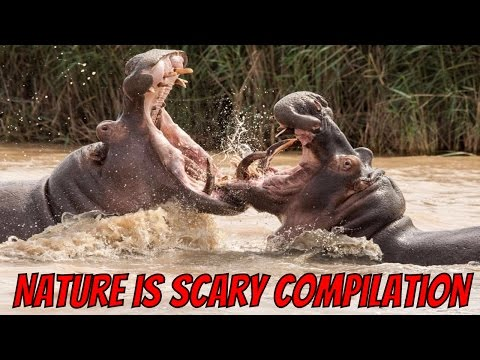 Nature Is Scary Compilation