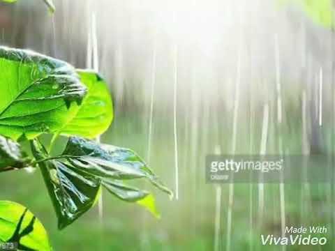Pan lilu Joyu Ne Tame Yaad Aavya...