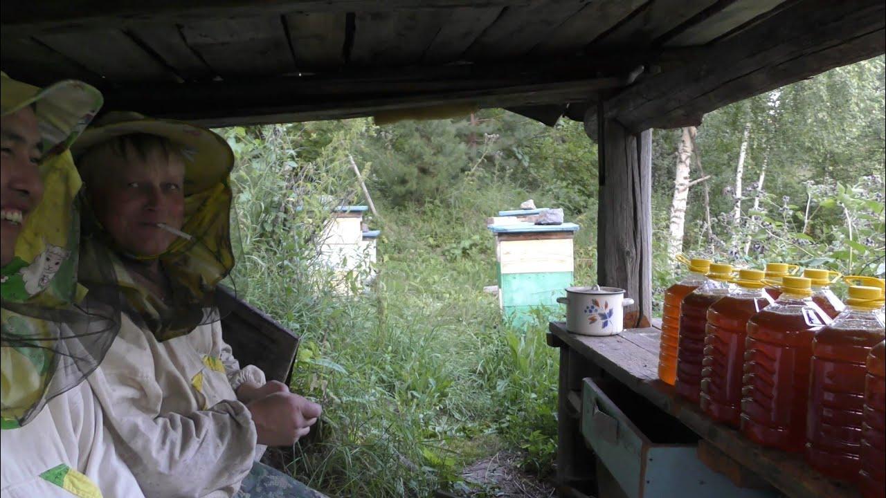 Качаем мёд, пасека на связи.