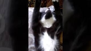 Кошка спит под трек Tuesday Burak Yeter