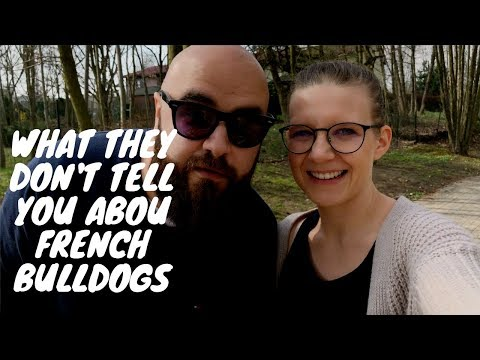 What they don't tell you about French Bulldogs