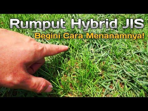 Rumput Hybrid Lapangan Jakarta International Stadium