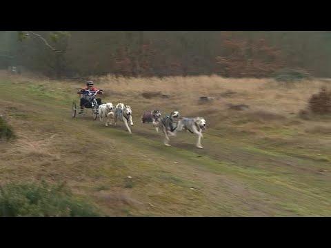 شاهد: بريطانيا تحتضن منافسة الكلاب السيبيرية  - 11:54-2019 / 2 / 19