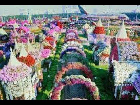 Dubai Miracle Garden 2016-2017  Day and Night