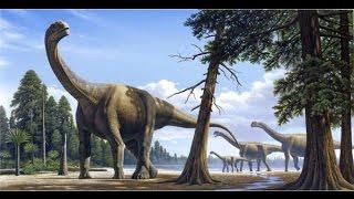 Camarasaurus File