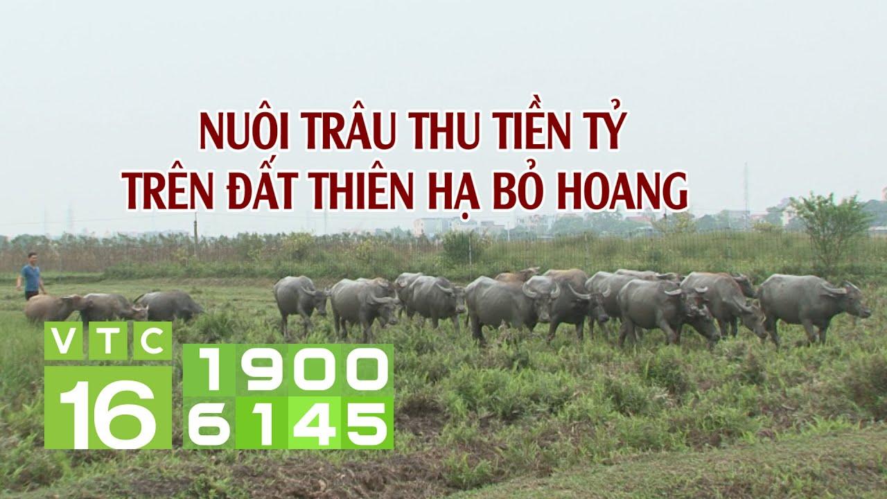 Nghịch cảnh: Người bỏ ruộng, người kiếm bộn tiền từ ruộng hoang | VTC16