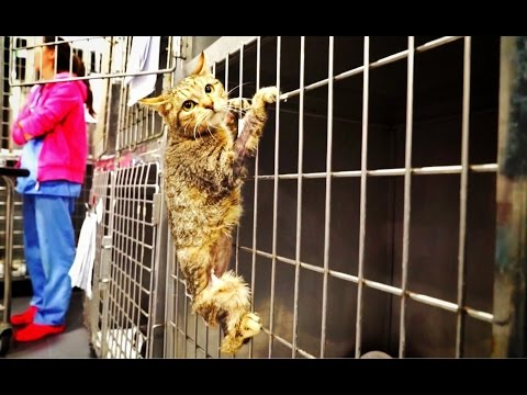 Amazing cat hero loses a leg then something EPIC happens