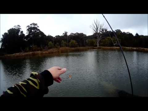 How To Catch Stocked Rainbow Trout In A Pond
