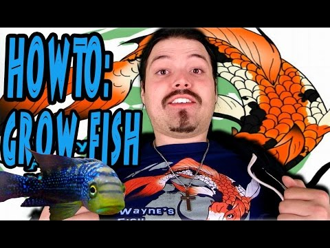 How To: Grow Fish Big And Strong, Fast And Easy