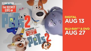 The Secret Life Of Pets 2 | All-New Mini Movies | Now on Digital; 8/27 on Blu-ray & DVD