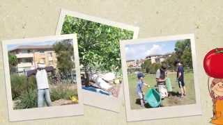Food and Native school garden   Maroubra Bay School