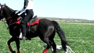 Road Trial Excellent Hock Exercise Figure 8