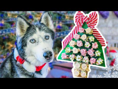 DIY DOG ADVENT CALENDAR 2016 for Christmas  🎄